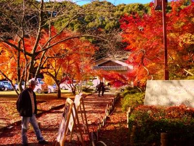 秋の町民ハイキング