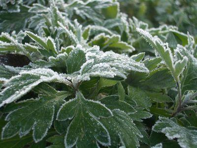 稲庭うどんの郷 初霜