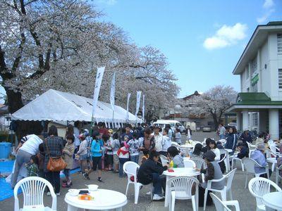 2009稲庭桜まつり