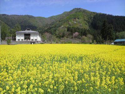 稲庭うどんの郷 菜の花