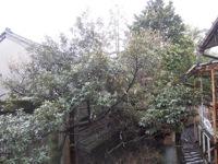 岩本清商店 庭
