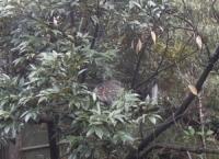 木の中に鳥