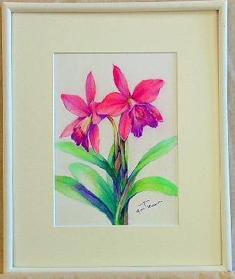 ラブノット 可憐で可愛らしい花です。色鉛筆技が冴えます