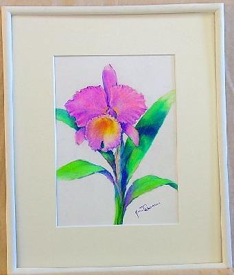 マルセラコッス 優雅な落ち着いた花 風格があります