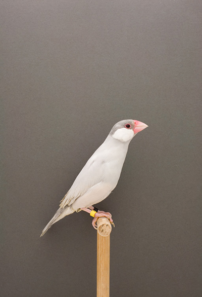 BIRD-15.jpg