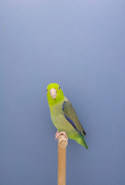 BIRD-13.jpg