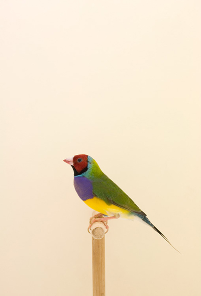 BIRD-9.jpg