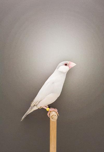 BIRD-15a.jpg