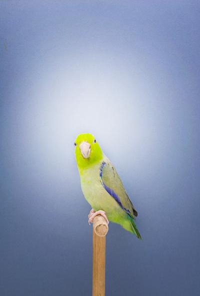 BIRD-13a.jpg