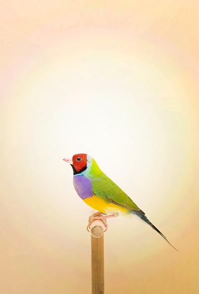 BIRD-9a.jpg