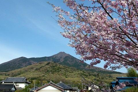 筑波山とサクラ