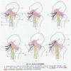 梨状筋と座骨神経