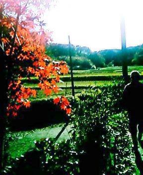 土屋の紅葉