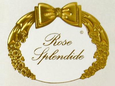 Rose splendide