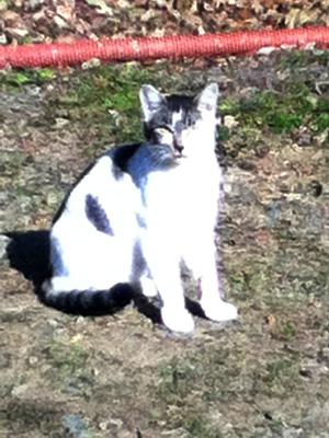 管理釣り場 トラウト 猫