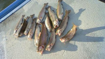 管理釣り場 トラウト