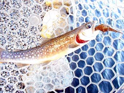管理釣り場 朝霞ガーデン2号ルアー・フライ池釣果