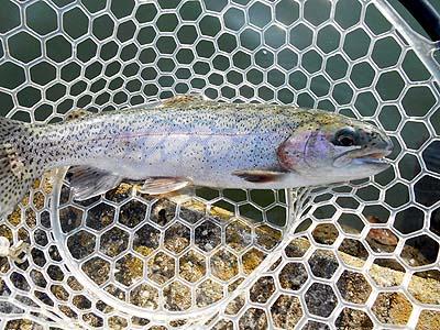 管理釣り場 朝霞ガーデン 中サイズのトラウト