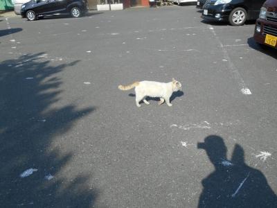 朝霞ガーデンにいる猫