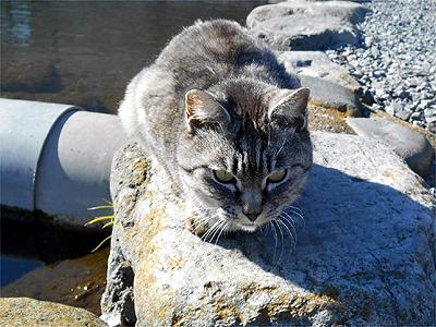 朝霞ガーデン 猫