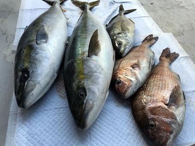 海釣り 青物