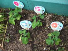 花たち野菜たち