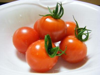 トマト03