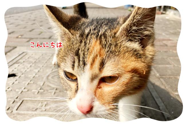 0308_10.jpg