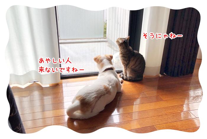 0917_03.jpg