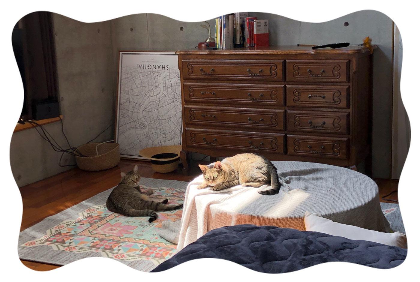 3768b24792 日の出が早くなり、差し込む日差しが強くなってきたので、猫たちはひなたぼっこが捗る。 スプラトゥーンやってると、お構いなく膝に乗ってくるので、負けが込んでい  ...