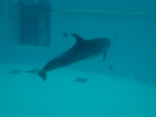 透明アクリルを透してイルカの全体が見える