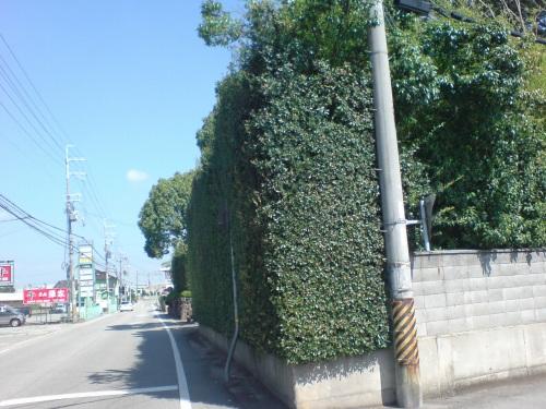 背の高い垣根