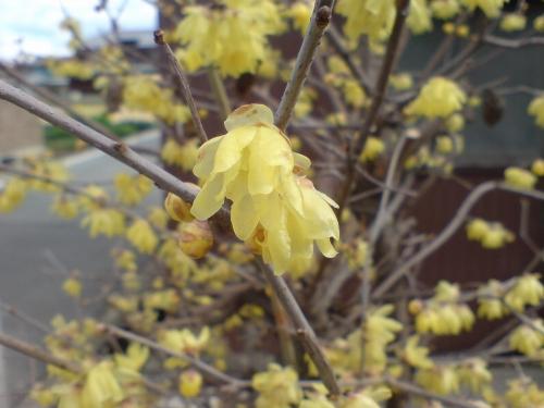 黄色い花がみんな下を向いている