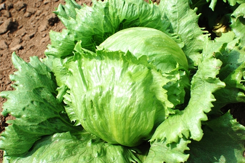 野菜_003.JPG