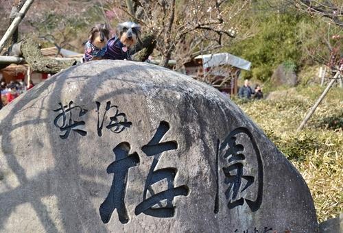 熱海梅園_058.JPG
