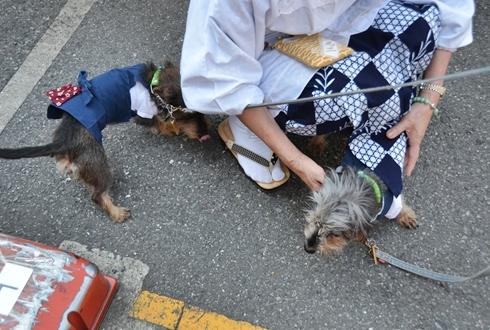 2012三社祭_022.JPG
