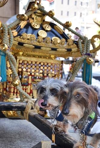 2012三社祭_043.JPG