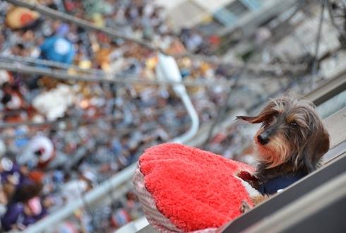 2012三社祭_055.JPG