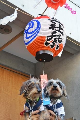 2012三社祭_079.JPG