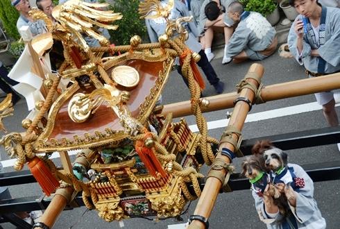2012三社祭_100.JPG