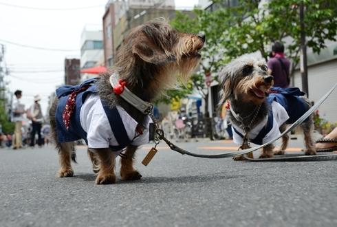 2012三社祭_010.JPG