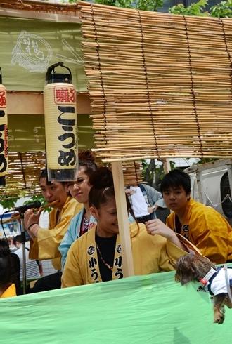 2012三社祭_032.JPG