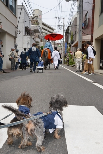 2012三社祭_051.JPG