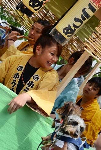 2012三社祭_054.JPG