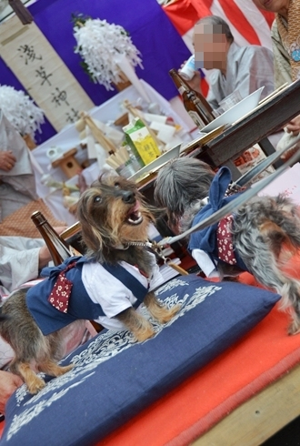 2012三社祭_095.JPG