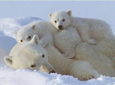 クマの画像 p1_32