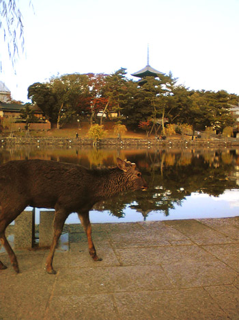 奈良の鹿と猿沢池