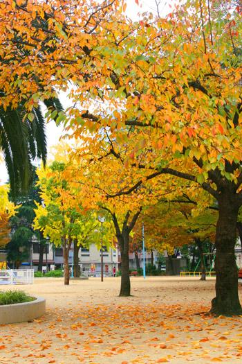 紅葉の西船場公園