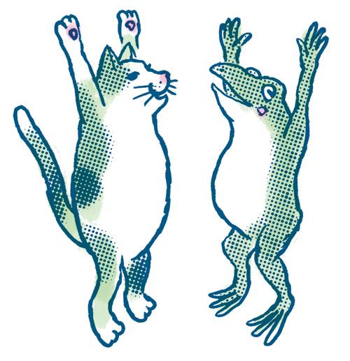 カエルと猫がバンザイ