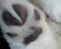 JOYの手